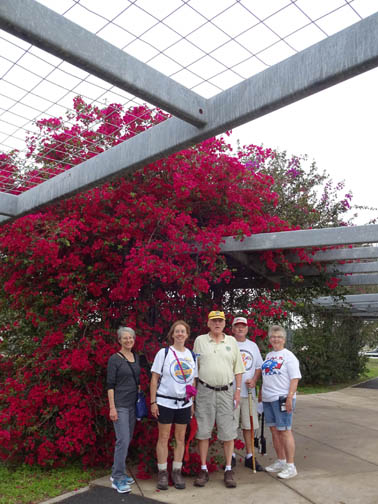 Beautiful bougainvillea background for a group of Volksmarchers. Picture by Sheri